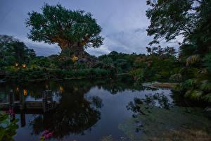 Картинка Штаты Озеро Вечер Флорида Деревья Bay Lake