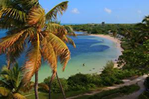 Картинки США Парки Берег Флорида Пальмы Пляж Bahia Honda State Park