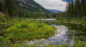 Фото Штаты Парк Озеро Леса Водяные лилии Howard Lake North Cascades National Park Природа
