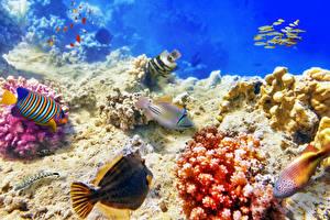 Картинка Подводный мир Кораллы Рыбы животное