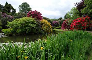 Фотография Великобритания Пруд Сады Цветущие деревья Трава Biddulph Grange Garden Природа