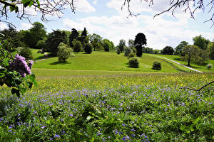 Обои Великобритания Лето Луга Деревья Трава Calke Abbey Природа картинки