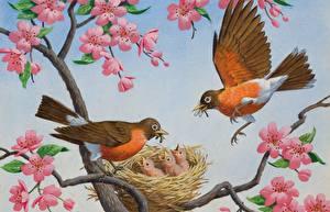 Фотография Птицы Рисованные Птенцы Гнездо Arthur Saron Sarnoff