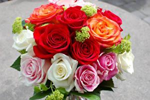 Фото Букеты Розы Цветы