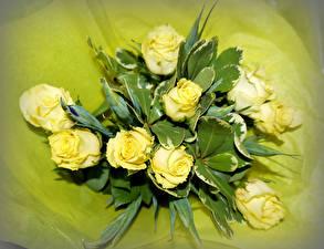 Обои Букеты Розы Желтый