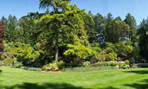 Картинки Канада Парк Газоне Ели Дерева Butchart Gardens Природа