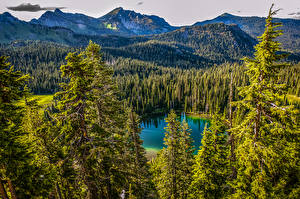 Картинка Канада Парки Озеро Горы Леса Пейзаж Mt. Rainier National Park