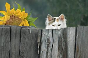 Картинка Коты Ограда Деревянный Животные