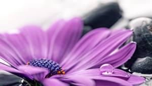 Фотография Крупным планом Капли Фиолетовый