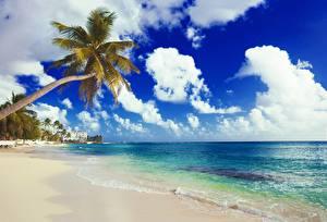 Фотографии Берег Море Небо Пальмы Пляж Облака Природа