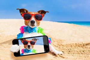 Картинка Собака Пляж Джек-рассел-терьер Смартфоны Очках Селфи животное
