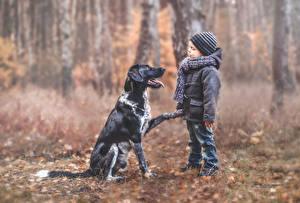 Фото Собаки Мальчики Шапки Куртка Ребёнок Животные