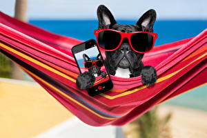 Картинки Собаки Бульдог Очки Смартфон Забавные Пища
