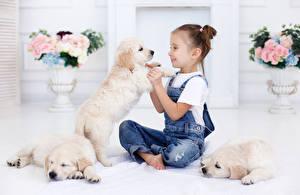 Фотография Собаки Девочки Сидит Ретривер Джинсы Щенок Улыбка Дети Животные