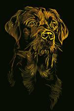 Фото Собаки Рисованные Черный фон Ретривер Животные