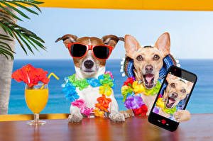 Фото Собаки Курорты Сок Джек-рассел-терьер Чихуахуа Очки Смартфон Бокалы 2 Селфи Забавные Животные
