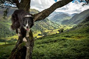 Фотография Собаки Ствол дерева Бордер-колли