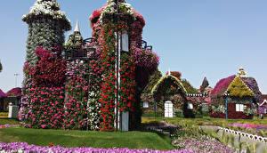 Фотографии Дубай Сады Объединённые Арабские Эмираты Дизайн Miracle Garden Природа