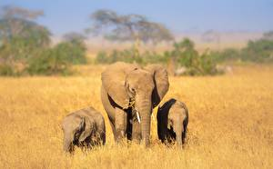 Фото Слоны Детеныши Трое 3