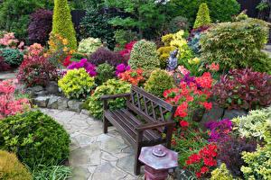 Картинка Англия Сады Рододендрон Кусты Скамья Walsall Garden Природа