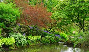 Фотография Англия Парки Пруд Кусты Деревья Sezincote Park Природа