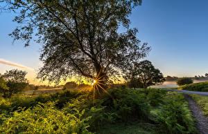 Фотография Англия Рассветы и закаты Дерево Лучи света Траве Природа