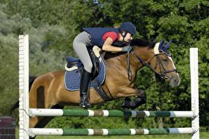 Фотография Верховая езда Лошади Прыжок Униформа спортивные Девушки
