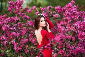 Фотография Цветущие деревья Шатенка Спина Смотрит Девушки