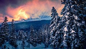 Картинки Леса Зимние Деревья Снег Природа