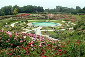 Фото пятая республика Парки Фонтаны Розы Газон Кусты Caen Природа