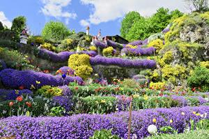Картинка Германия Сады Лаванда Тюльпаны Дизайн Кусты Betzenstein Природа
