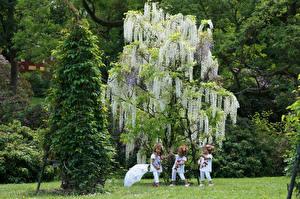 Фото Германия Парки Вистерия Кукла Девочки Деревья Зонт Grugapark Essen Природа