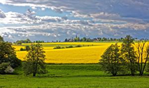 Фотография Германия Пейзаж Поля Небо Рапс Деревья Облака Reckershausen Природа