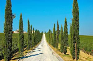 Фотография Италия Дороги Поля Дерева Ели Imbria Природа