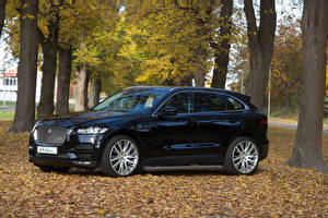 Обои Ягуар Черные Металлик 2016 Arden F-Pace Автомобили