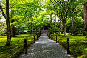 Картинки Япония Киото Парки Деревья Ohara Природа