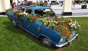 Фотографии Петунья Бархатцы Цветы Автомобили
