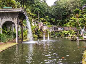 Фото Португалия Сады Водопады Скульптуры Пальмы Monte Palace Tropical Garden Funchal Madeira Природа