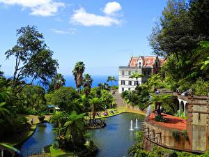 Фотографии Португалия Дома Парки Пруд Деревья Funchal  Madeira
