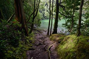 Обои Португалия Озеро Леса Мох Azores Природа