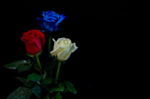 Картинка Розы Черный обстановка Втроем