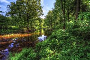 Фотография Россия Санкт-Петербург Парки Деревья Nevsky Forest Park Природа
