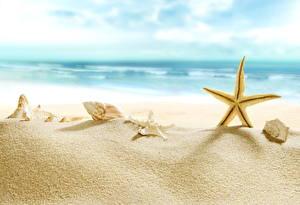 Фото Ракушки Морские звезды Побережье Море Песок Пляж Природа