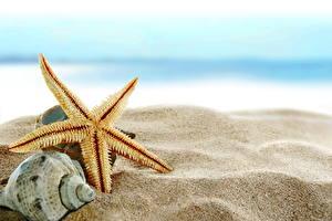 Фотографии Ракушки Морские звезды Песок