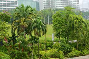 Обои Сингапур Тропический Сады Кусты Деревья Gardens By the Bay Природа