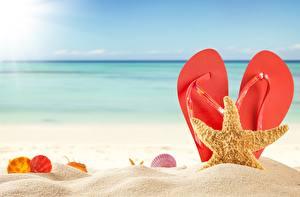 Фотография Морские звезды Лето Сланцы Песок Пляж