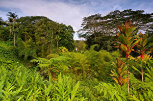 Фото Тропики США Гавайи Деревья