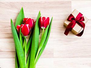Фотографии Тюльпаны Красный Подарки Бантик Цветы