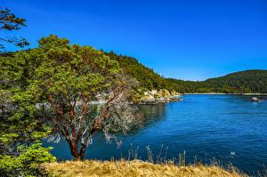 Фотографии Штаты Озеро Леса Парки Вашингтон Деревья Deception Pass State Park