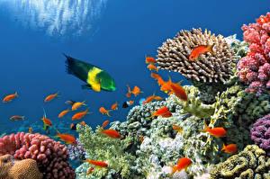 Картинки Подводный мир Кораллы Рыбы